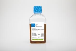 Certified Fetal Bovine Serum Qualified for mesenchymal stem cells