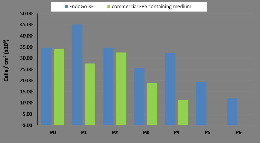 HPMEC endothelial cells proliferation in EndoGo XF Media