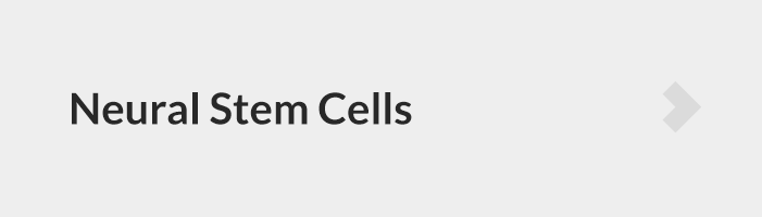 Small Molecules for neural stem cells