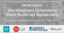 Mycoplasma Contamination Affects